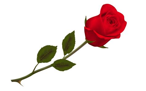 Interior Painting For Home by Single Red Rose For Happy Rose Day Wishes Hd Wallpapers