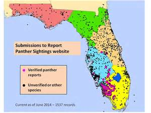 panther sightings 2014 panthers reported via website as