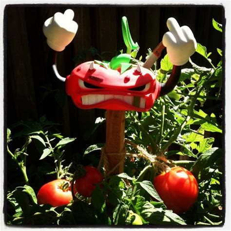 Toys Buckeye Rot Sket One there s one in every bunch sket one s buckeye rot tomato guardian
