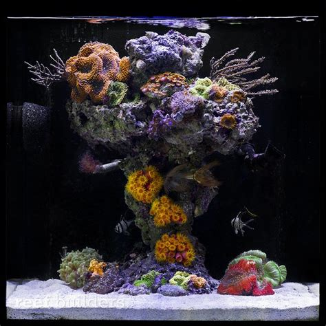 Aquascaping Live Rock Ideas Reef Builders Pick Five Of Our Favorite Nano Aquariums