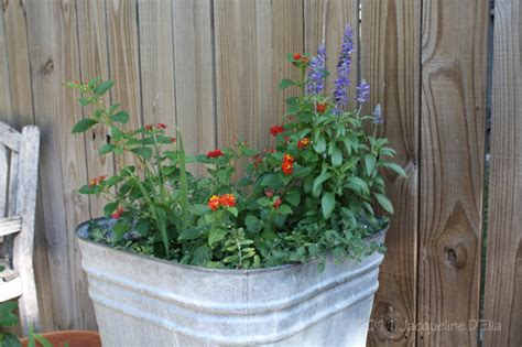 container gardening in houston tips for container gardening in houston