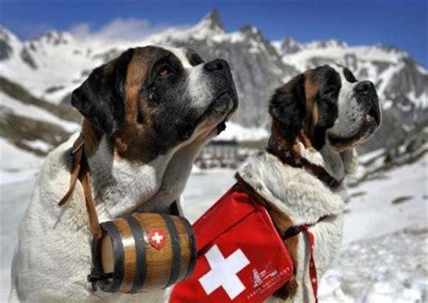 san bernard san bernard foto gallery gallerie utenti svizzera il gran san bernardo