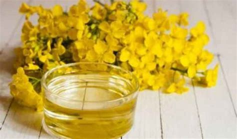 olio di colza alimentare olio di colza cos 232 fa alla salute 232 pericoloso e