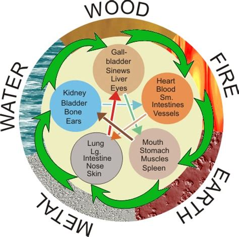 traditional psychology theory understanding the five elements nature health