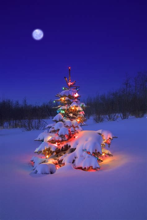 glowing christmas tree in snow marie lamba author