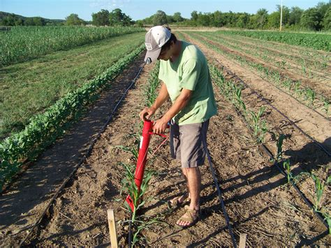 Horticulture Happenings: Three Sisters and No Till