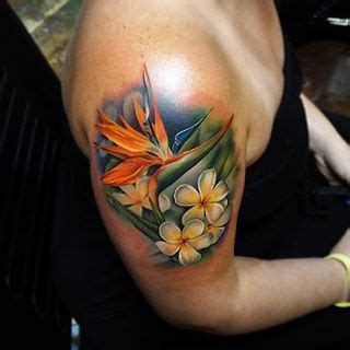 bird of paradise flower tattoo designs 25 best ideas about bird of paradise on