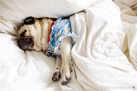 pug pajamas for pugs pug pajamas hug a pug