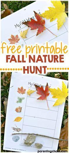 kindergarten activities nature 1000 images about preschool activities on pinterest
