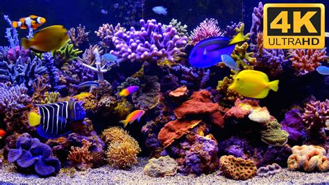 best fish screensaver aquarium live wallpaper for pc 55 images