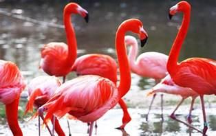 pink flamingos jpg quotes