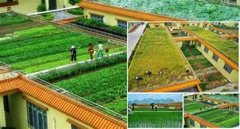 pengertian pertanian menurut  ahli  contoh pertaniannya