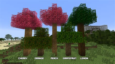What Type Of Tree Is Used To Make Paper - moarfood minecraft mods