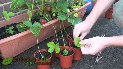 What To Plant In A Strawberry Planter by Getting Grubby In The Garden This Summer With The