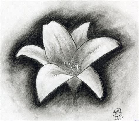 Drawing W Charcoal by The Gallery For Gt Charcoal Drawings Of Flowers