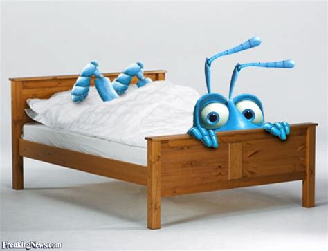 funny bed funny bedbugs pictures freaking news
