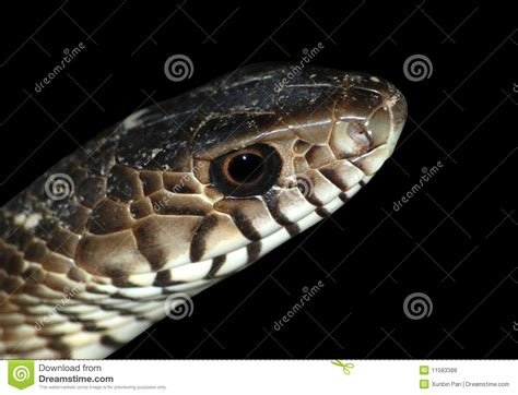 python heat l snake stock photo image of cold isolated