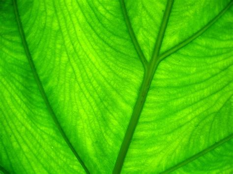 wallpaper of green leaves black and white wallpapers green leaf wallpaper