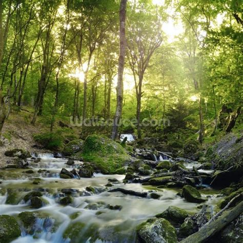 wall murals forest forest waterfall wall mural forest waterfall wallpaper