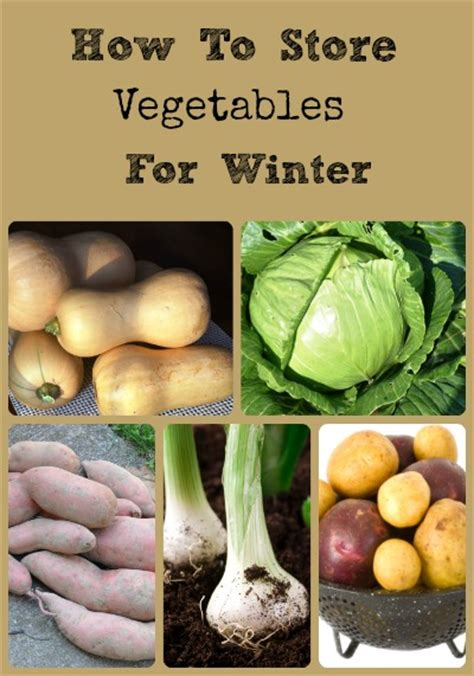 top 28 how to store vegetables from the garden it s
