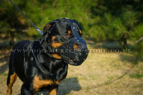 size of a rottweiler rottweiler muzzle size and shape k9 muzzle 163 55 29