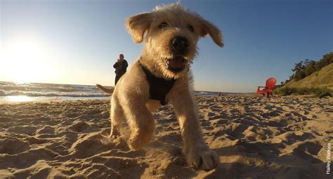 friendly beaches in michigan pack up your pets and hit the road with these friendly