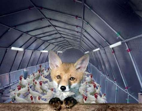 Neil Keenan Update Keeping The Fox Out Of The Hen House The Rothschilds Go Into