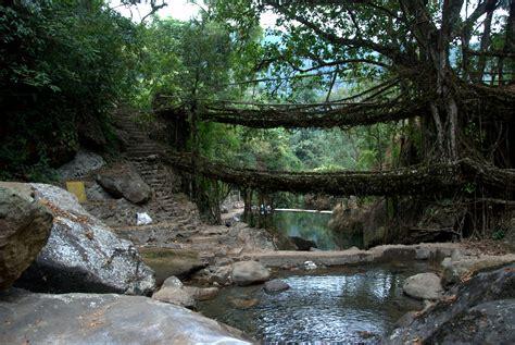 living bridges file a double decker living bridge in meghalaya december 2011 jpg wikimedia commons