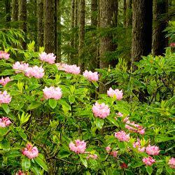 wallpaper fotografi alam gambar alam alami gambar c