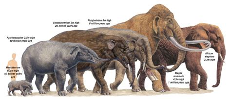 Wallpaper Grade B By Luxurios 5 92 Uk 45cm X 5m Termurah extinct elephant species search random stuff