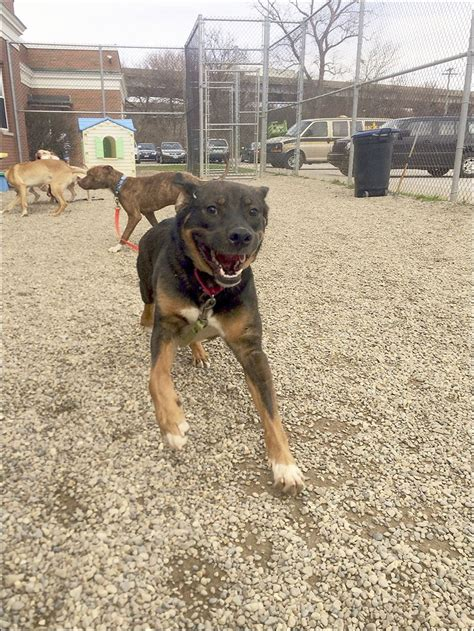 lucas county warden kill rate again in 2015 at lucas co canine agency toledo blade