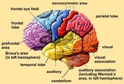 psychology images the brain poem wallpaper and ap psychology