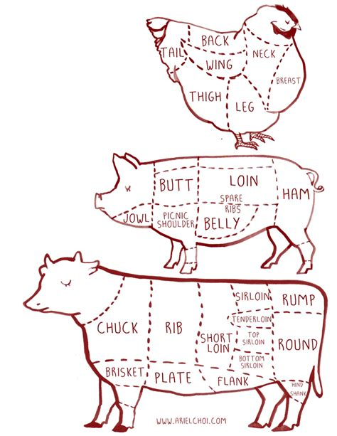 butcher diagram cow pig chicken butcher diagram chart illustration