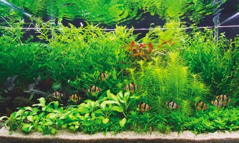 Aquascape How To by How To Set Up A Style Aquascape Practical