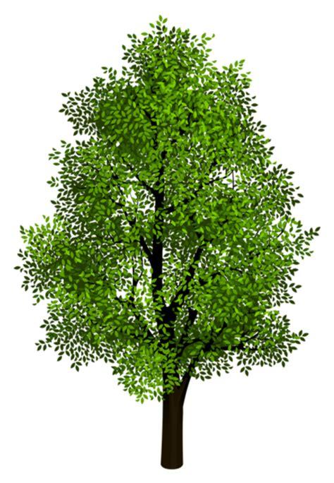 transparent tree arbre
