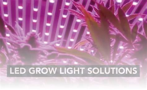 Lu Grow Light noticias lumilight grow
