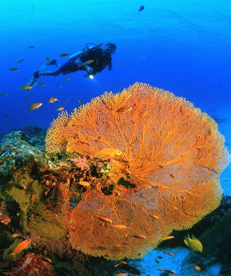 dive phuket scuba diving refresher course phuket