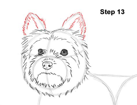 how to draw a yorkie step by step easy steps how to draw a yorkie how to draw a terrier how to