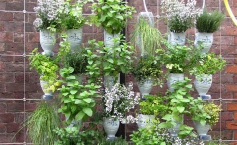 hanging wall gardens step by step guide for a hanging bottle wall garden