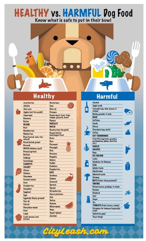 dangerous foods for dogs best 25 toxic foods for dogs ideas on fruits for dogs safe foods for