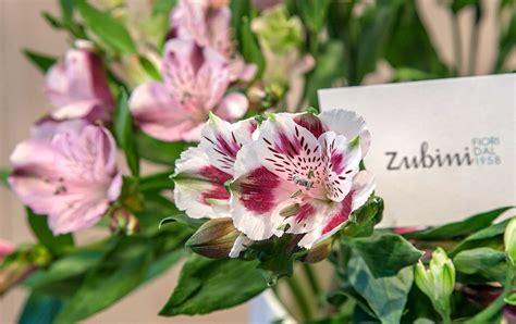 fiori recisi zubini