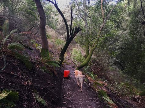 claremont canyon hikes dogs love hikes dogs love