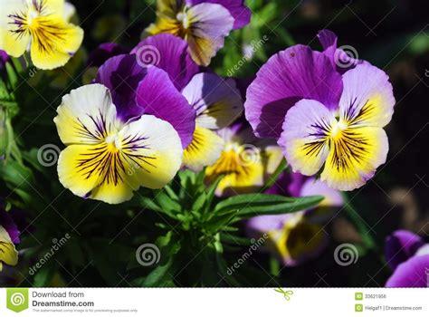 imagenes de flores azules brillantes flores azules brillantes imagen de archivo libre de