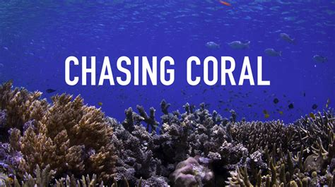 Watch Chasing Coral 2017 Bits Of Science Daily News On Science Sustainability And A View On The State Of Our Planet