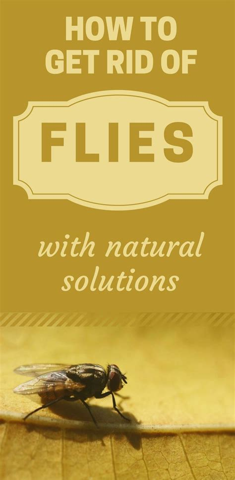 how to get rid of flies in your backyard 1047 best house cleaning images on pinterest cleaning