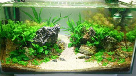 aquascape forum mein kleiner einstieg ins aquascaping 25 liter