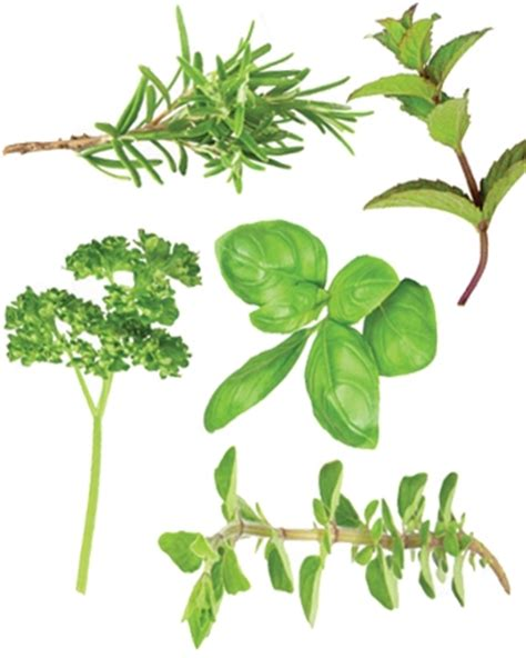 herbs for dogs herbs that are for dogs modern magazine