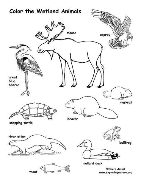 coloring pages of land animals wetland animals coloring page