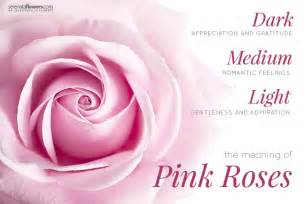meaning of pink history varieties and meaning of pink rose