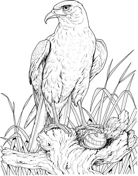 Eagle Head Coloring Pages - GetColoringPages.com Eagle Coloring Pages Free